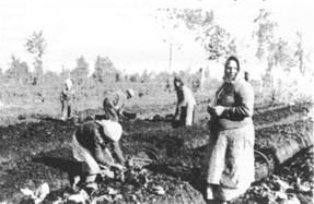 Bulviakasis  Bismarko  Pelkininkų kaime (  nuo 1923 metų  Žalgirių kaimas)